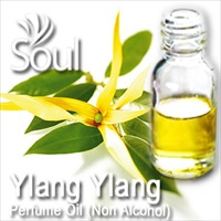 Perfume Oil (Non Alcohol) Ylang Ylang - 50ml